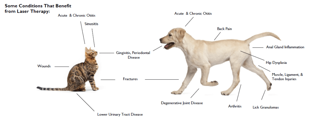 VSH laser therapy diagram